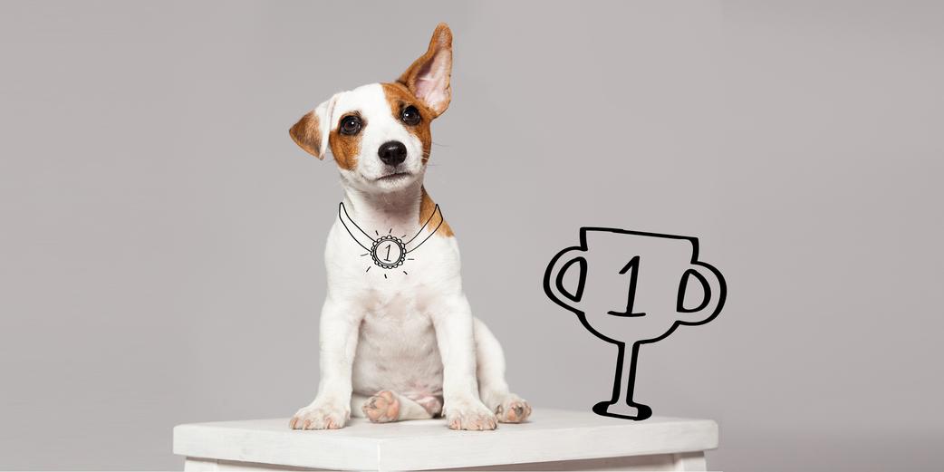 Education Top 3 Des Astuces Pour Donner De Bonnes Habitudes A Son Animal Biocanina
