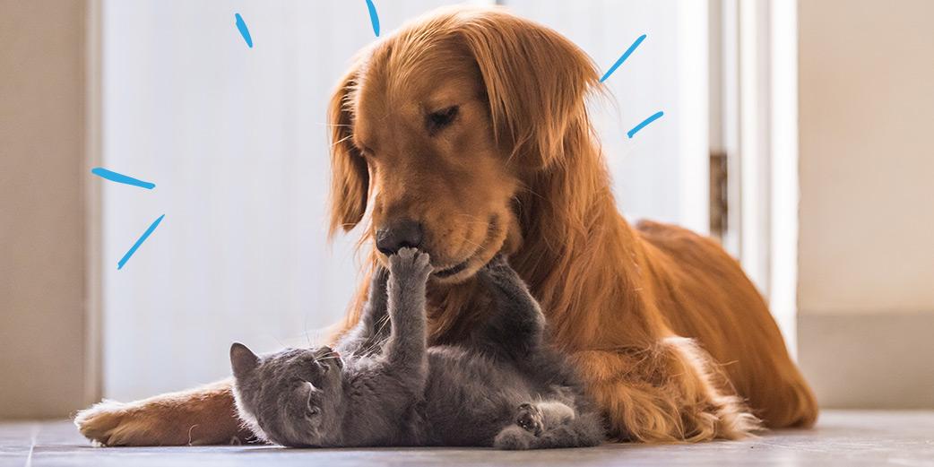 site de rencontre pour chiens et chats)