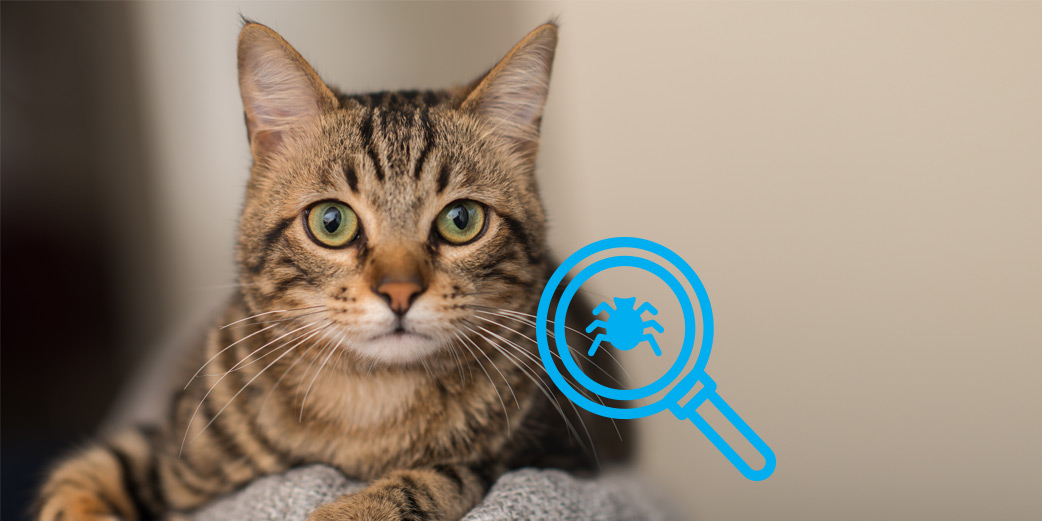 chat avec une loupe qui cherche des puces
