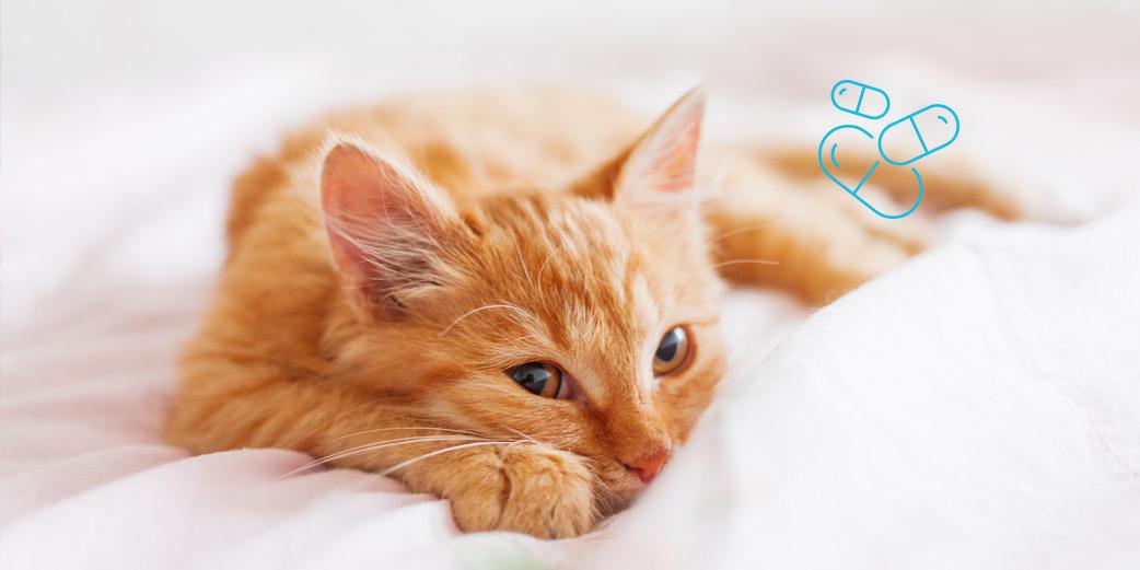 petit chat roux dans des draps
