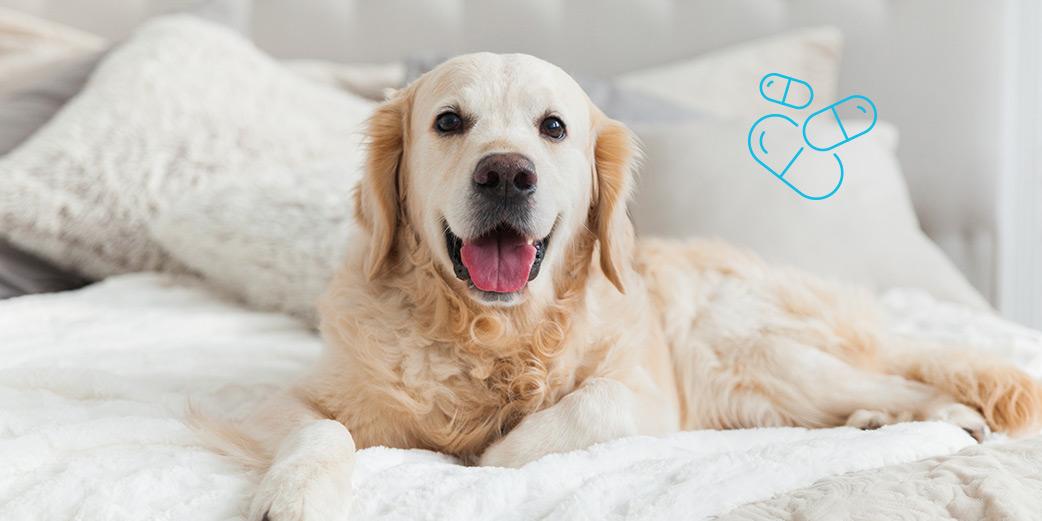 chien heureux dans un lit
